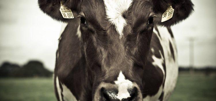 MBF om att Föreslå att det alltid ska erbjudas vegetariska alternativ och att inköpen av animaliska proteinkällor halveras upplagd