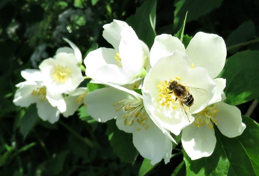 bi-i-blomma